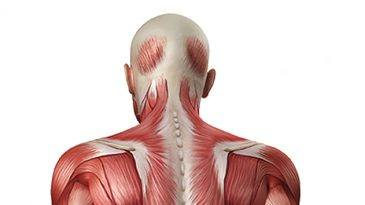 Back Muscle Strength – Flexibility and Mobility