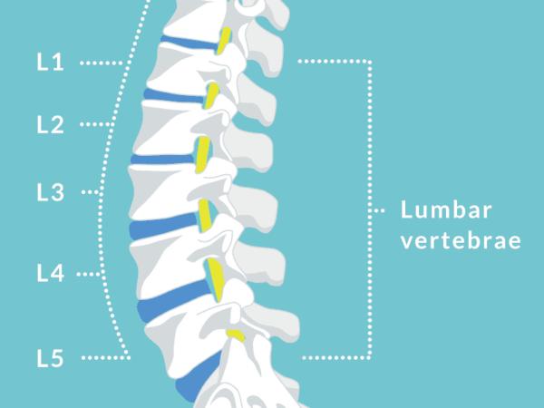Lumbar vertebrae scan.