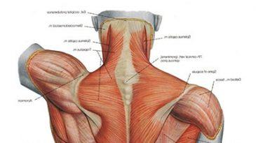 How to Fix Lower Back Muscle Strain?
