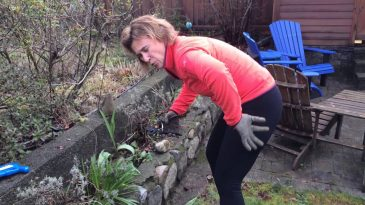 Tips To Prevent Lower Back Pain after Gardening